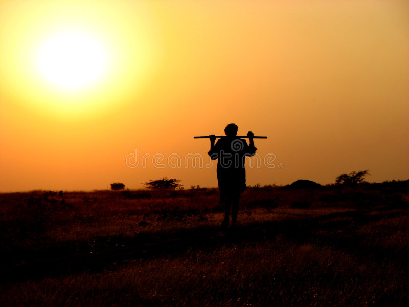 Shepherd's Evening. An old Indian shepherd walks his way home royalty free stock photo