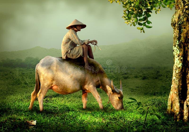 Shepherd sitting on back of buffalo stock photography