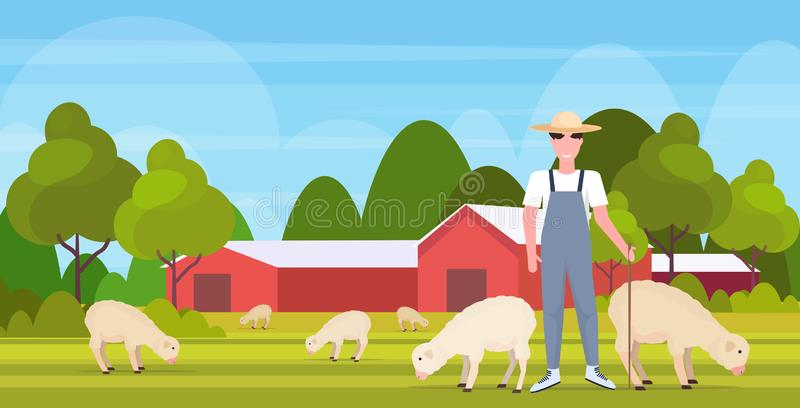 Shepherd with stick herding flock of white sheep smiling male farmer breeding sheep eco farming concept farmland. Countryside landscape flat full length vector illustration