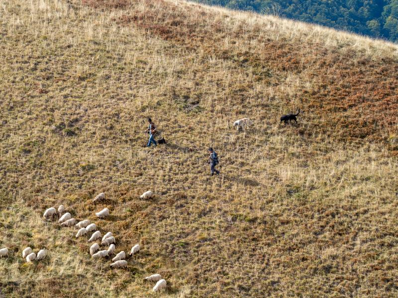 Shepherds in Baiu Mountains, Romania. Azuga/Romania - September 28 2019: Shepherds in Baiu Mountains. The Baiu Mountains are located in central Romania, a few stock photography