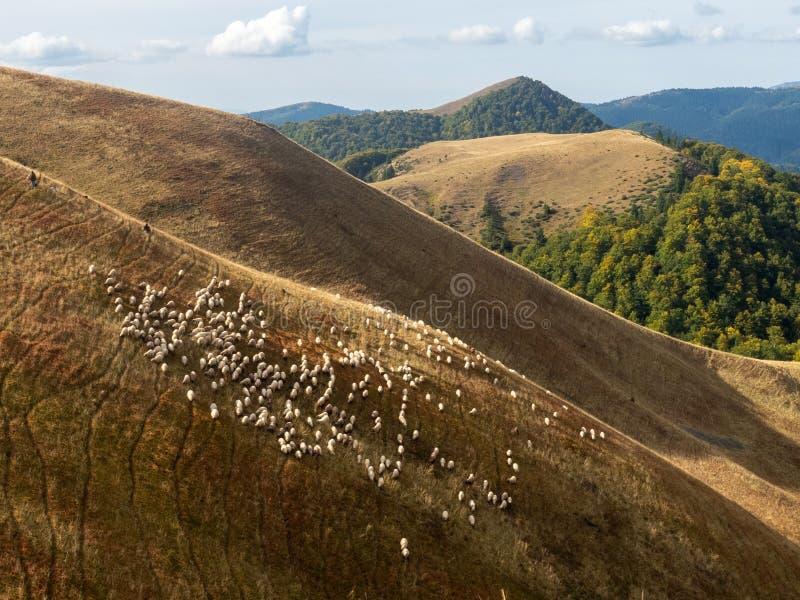 Shepherds in Baiu Mountains, Romania. Azuga/Romania - September 28 2019: Shepherds in Baiu Mountains. The Baiu Mountains are located in central Romania, a few stock image