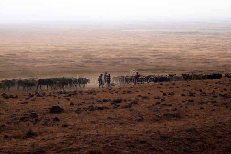 Shepherds o Masai fotos de stock