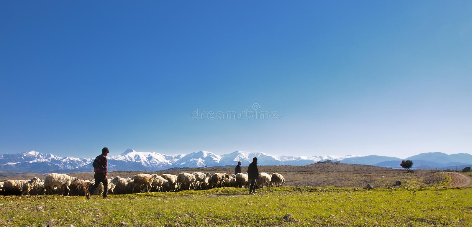 Download Shepherds With Their Sheep Herd Editorial Stock Image - Image: 32995044