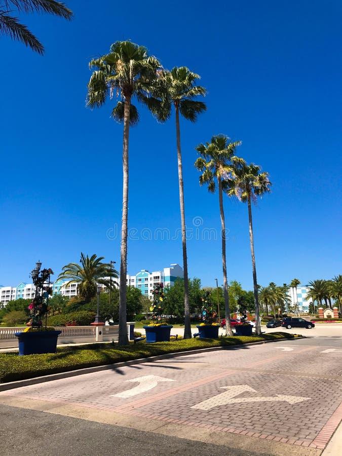 Sheraton Vistana Villages Orlando, Florida royaltyfri foto