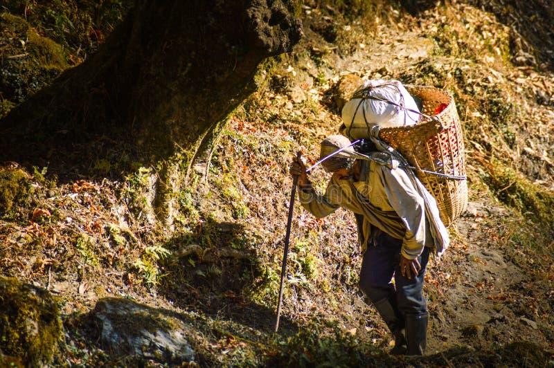 Sherpa stock photography
