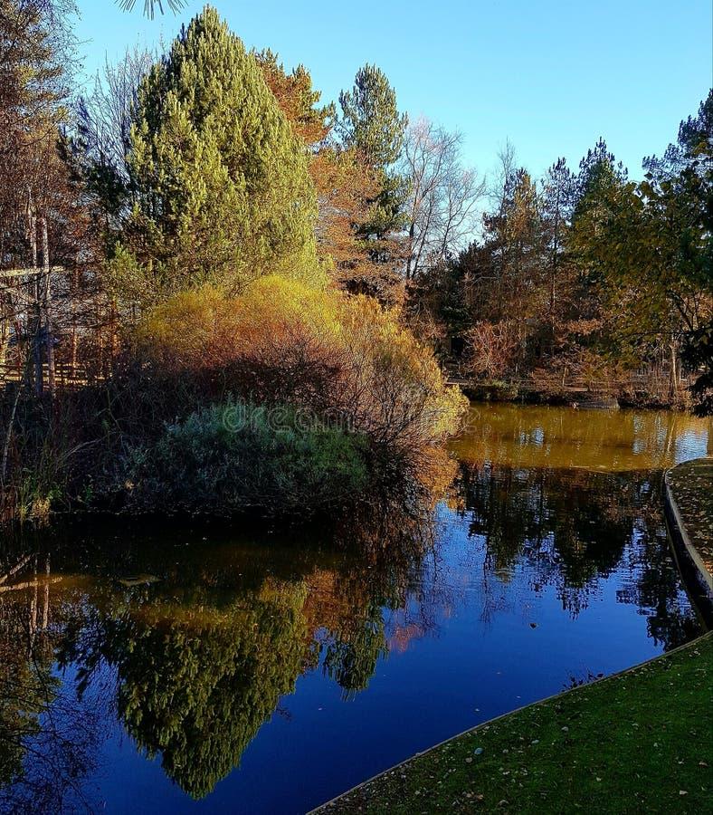 Sherwood Forest lake reflection royalty free stock images