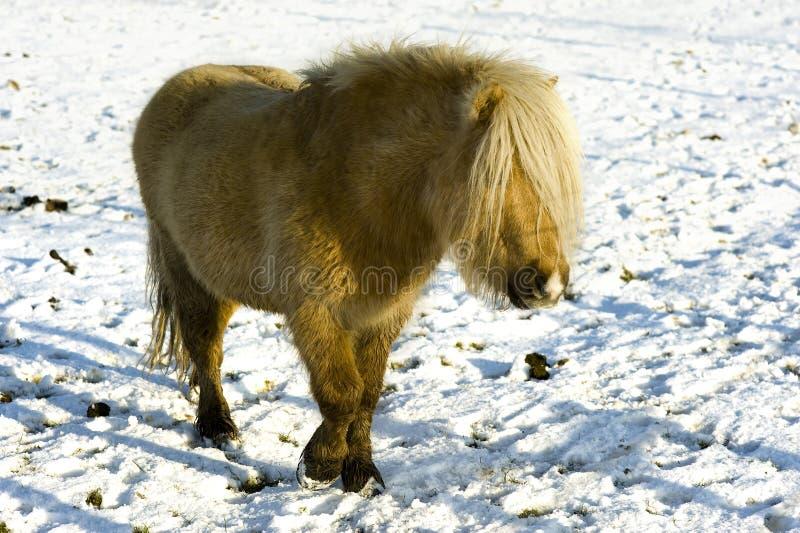 Shetland lizenzfreies stockfoto