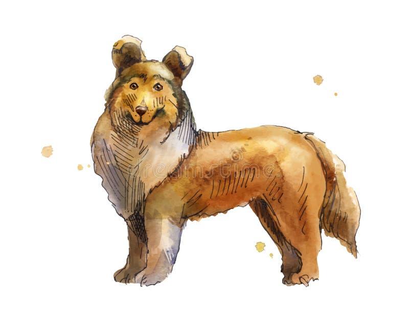 Shetland Sheepdog Rysować ręką w akwareli Nakreślenie depresji bro ilustracji