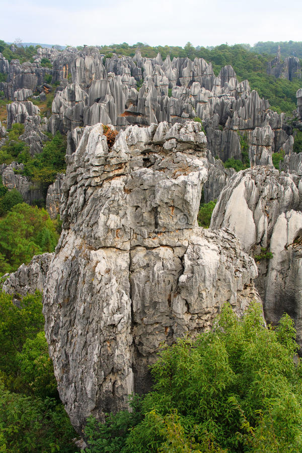 Shi Lin-park. Yunnan. China. stock afbeeldingen