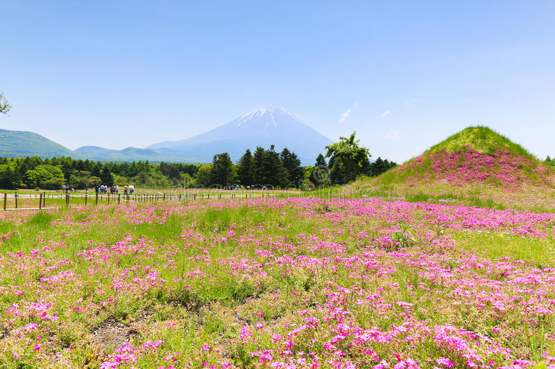 Shibazakura Festival with the field of pink moss of Sakura or ch royalty free stock image