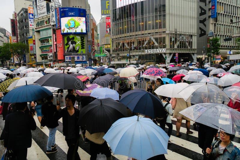 Shibuya, Japão: Povos com os guarda-chuvas que cruzam-se em um dia chovendo foto de stock royalty free