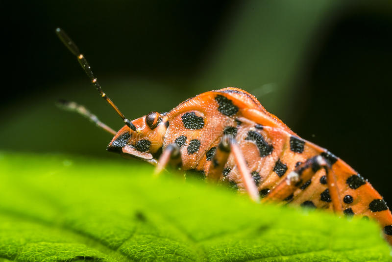 Download Shield Bug stock photo. Image of detailed, details, branches - 24606940