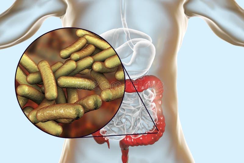 Shigella en forme de tige de bactéries qui causent la shigellose ou la dysenterie portée par les aliments d'infection illustration stock
