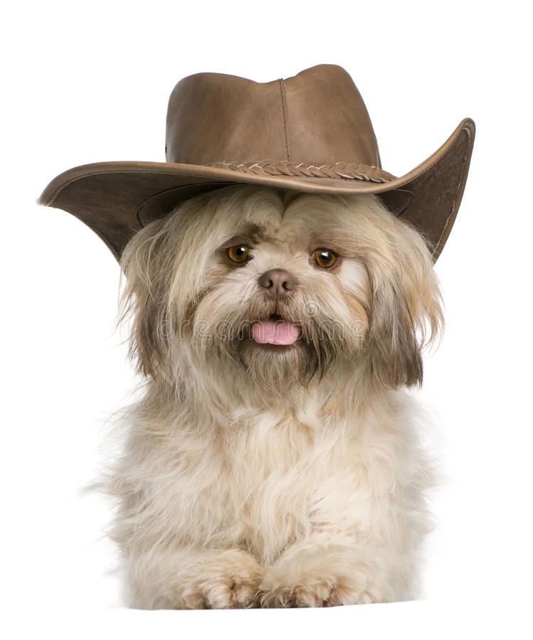 Old Cowboy Names For Dogs
