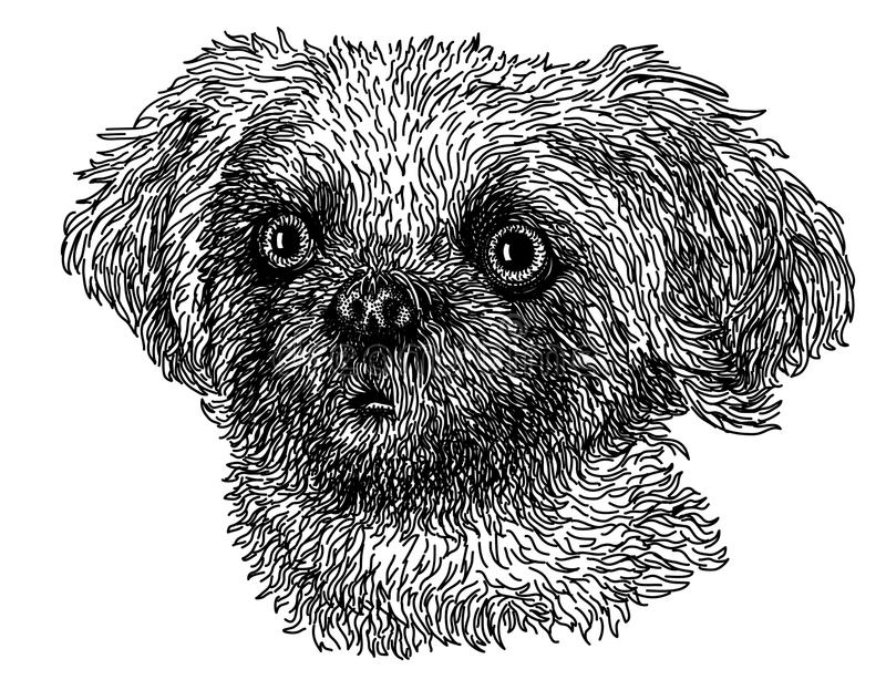 Shih Tzu royalty illustrazione gratis