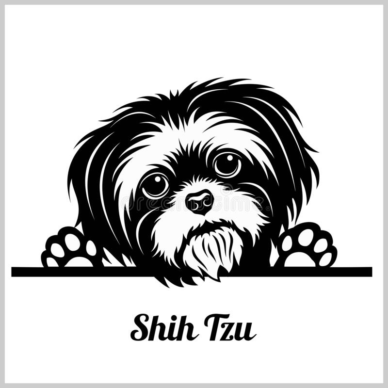 Free Shih Tzu Dog Breed - Peeking Dogs - Breed Face Head Isolated On White Royalty Free Stock Images - 170702899