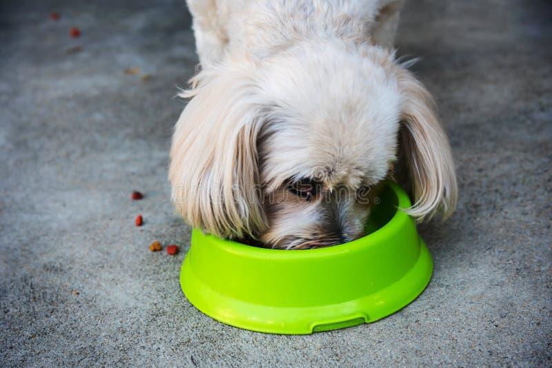 Shih Tzu eet droge hondevoer royalty-vrije stock foto's