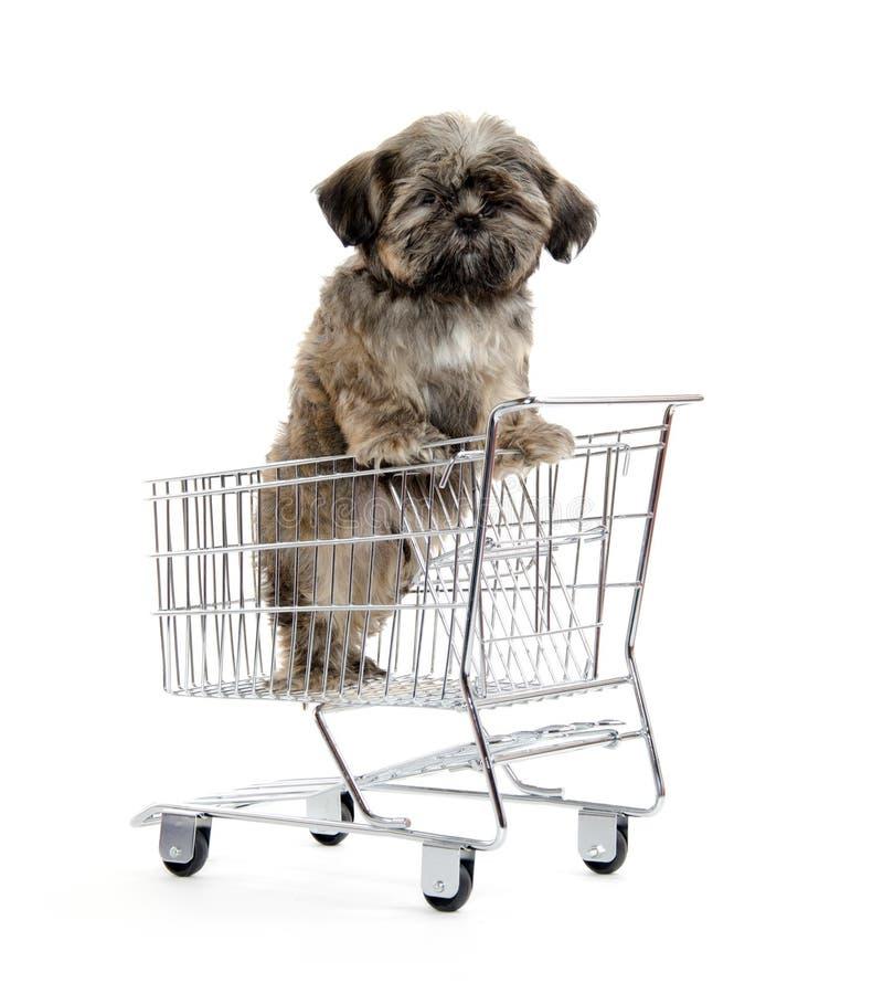 Shih Tzu Puppy In Shopping Card Stock Photography