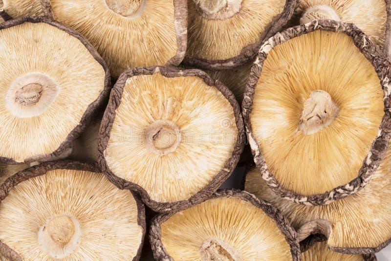 shiitake высушенных грибов стоковое изображение rf
