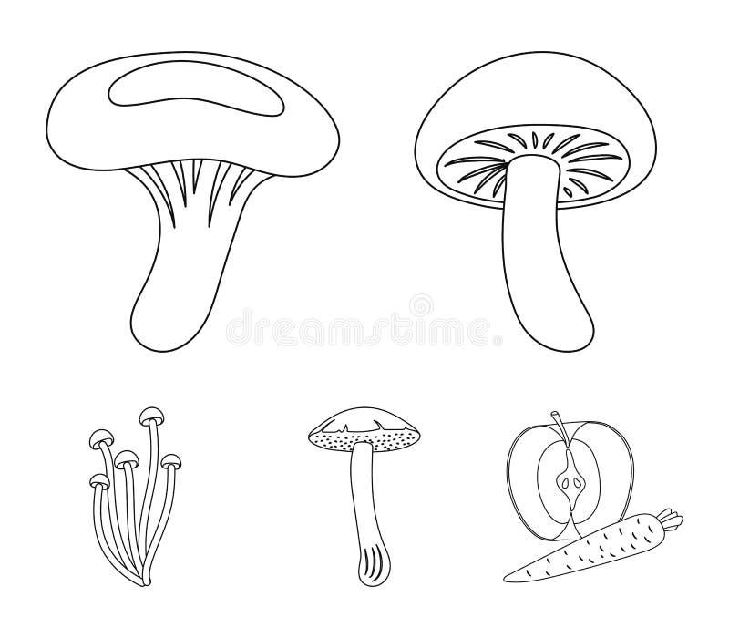 Shiitake, boleto marrom do tampão, enokitake, leite ajuste ícones da coleção na Web da ilustração do estoque do símbolo do vetor  ilustração royalty free