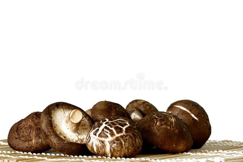 Shiitake mushroom. Raw Organic Shiitake Mushrooms on a Background royalty free stock photography
