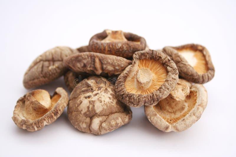 Shiitake mushrooms stock photography