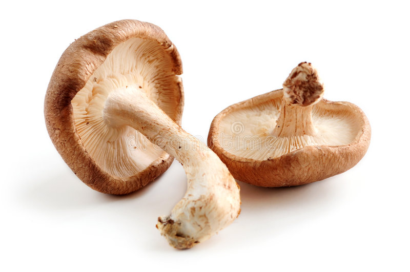Shiitake mushrooms. Two fresh shiitake mushrooms isolated on white background stock photos