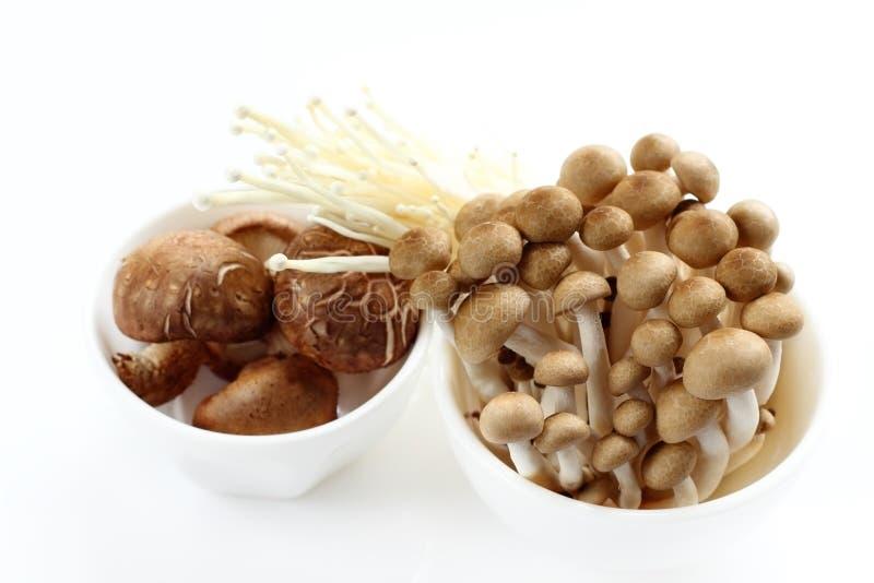 Shiitake is mushrooms for raw food. Shiitake is mushrooms for raw food on royalty free stock images