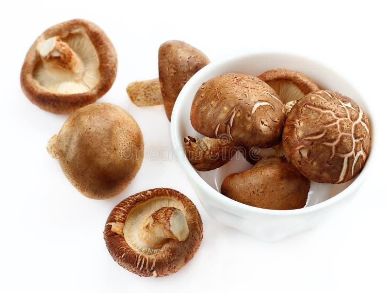 Shiitake is mushrooms for raw food. Shiitake is mushrooms for raw food on isolated stock photography