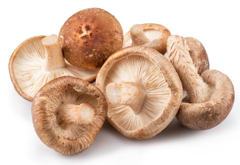 Shiitake mushrooms on the white background. royalty free stock image