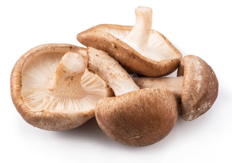 Shiitake mushrooms on the white background. royalty free stock photos
