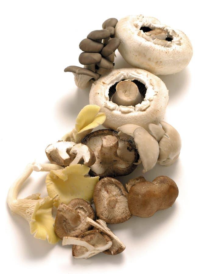 Shiitake, ostrica e funghi tradizionali fotografia stock