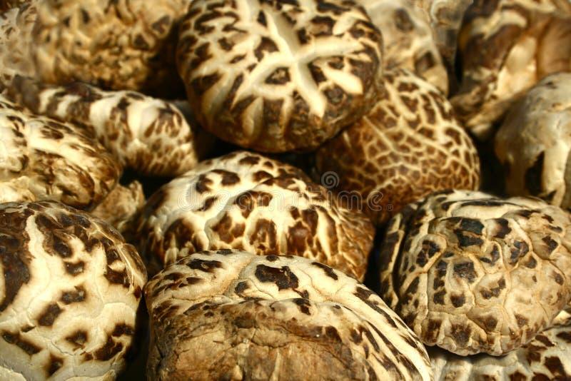 shiitake pieczarkowy zdjęcie royalty free