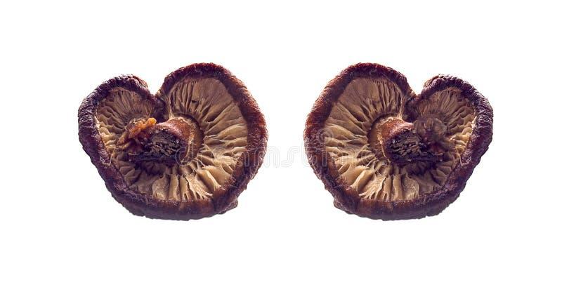 Shiitakepaddestoel geïsoleerd op witte achtergrond stock afbeeldingen