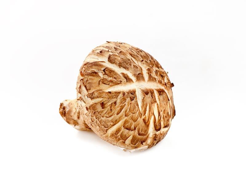 Shiitakepaddestoel op witte achtergrond stock foto's