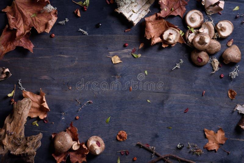 Shiitakepilze auf Holztisch, Herbsterntehintergrund Draufsicht, Kopienraum stockfoto