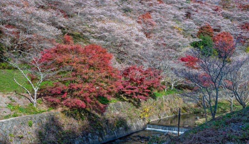 Shikizakura royalty free stock photos