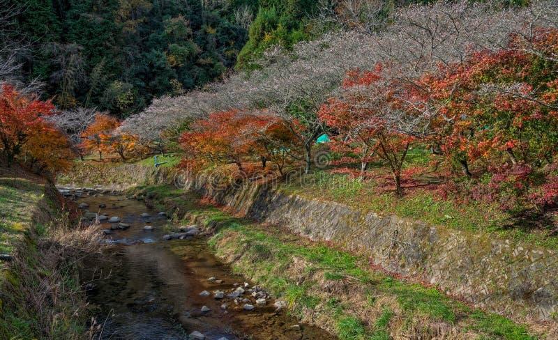 Shikizakura royalty free stock photography