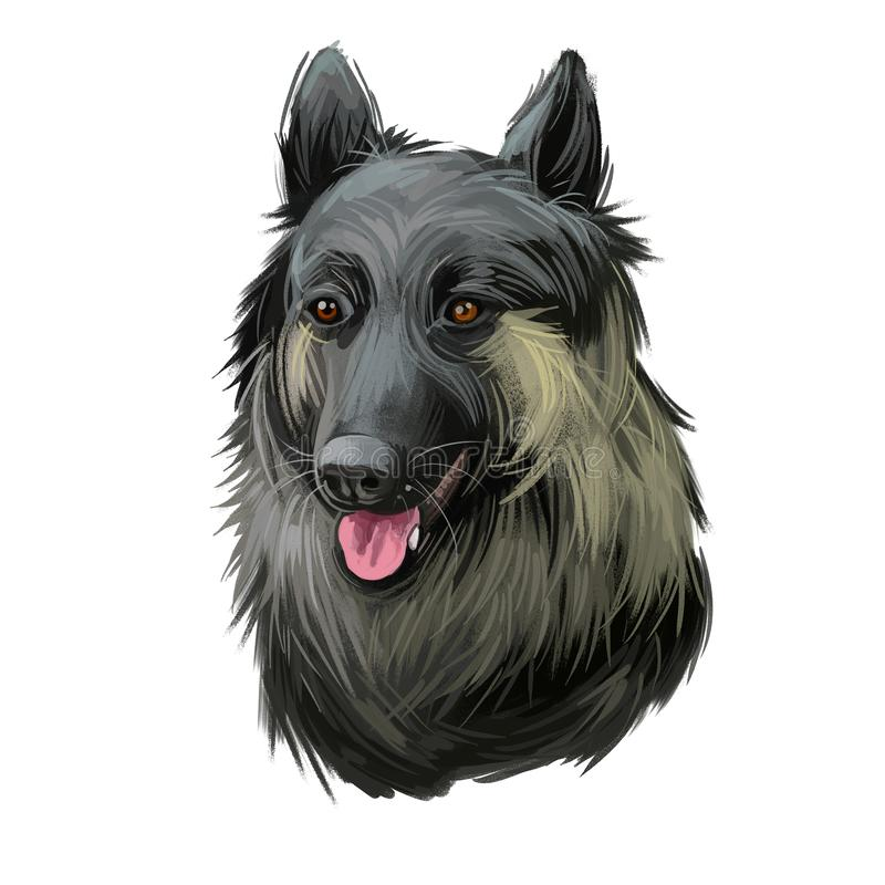 Shikoku dog originated from Japan, Japanese dog digital art. Hand drawn animalistic watercolor portrait, closeup of pet muzzle. Canine from Asia. Mammal with royalty free illustration