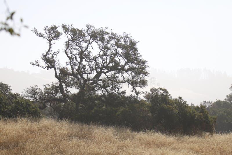 Shiloh Ranch Regional California Het park omvat eiken bossen, bossen van gemengd evergreens stock afbeelding