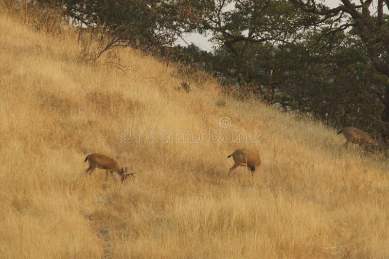 Shiloh Ranch Regional California Het park omvat eiken bossen, bossen van gemengd evergreens stock foto
