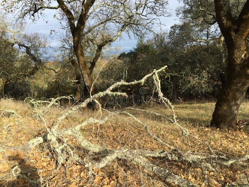 Shiloh Ranch Regional The-het park omvat eiken bossen, bossen van gemengd evergreens, randen met vegende meningen van Santa Rosa stock foto