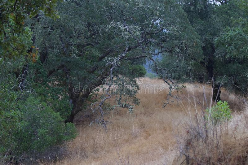 Shiloh Ranch Regional The park includes oak woodlands, forests of mixed evergreens, ridges with sweeping views of the Santa Rosa stock image