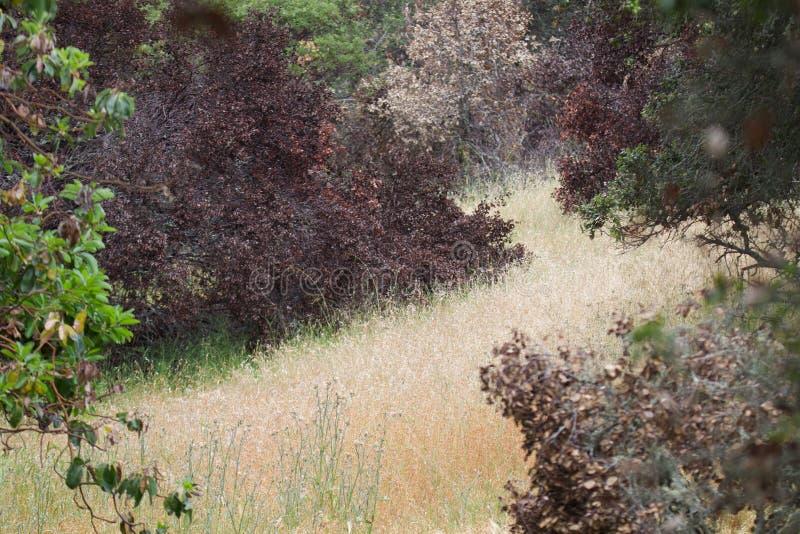 Shiloh Ranch Regional Park Kalifornien royaltyfri bild