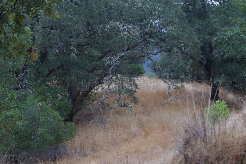 Shiloh Ranch Regional The parkerar inkluderar ekskogsmarker, skogar av blandade evergreen, kanter med att sopa sikter av Santa Ro fotografering för bildbyråer