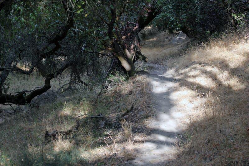 Shiloh Ranch Regional The parkerar inkluderar ekskogsmarker, skogar av blandade evergreen, kanter med att sopa sikter av Santa Ro royaltyfri bild