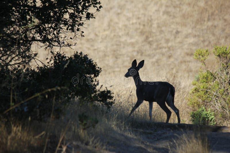 Shiloh rancho regionalność park zawiera dębowych lasy, lasy mieszani evergreens, granie z ogólnymi widokami Santa Rosa obrazy royalty free