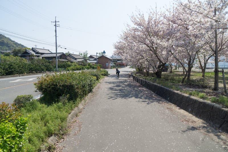 Shimanami Kaido popularna rowerowa trasa w Japan obrazy royalty free