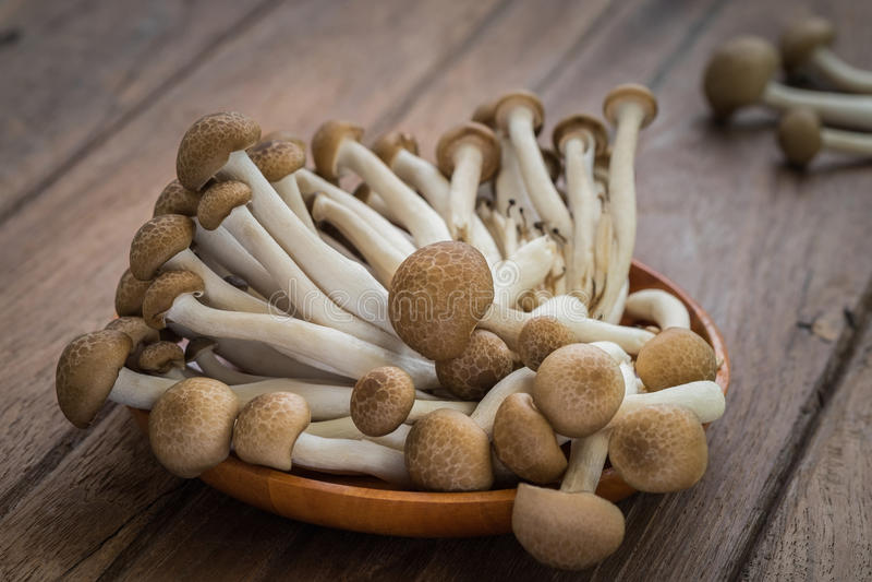 Shimeji在木板材的蘑菇褐色 免版税图库摄影