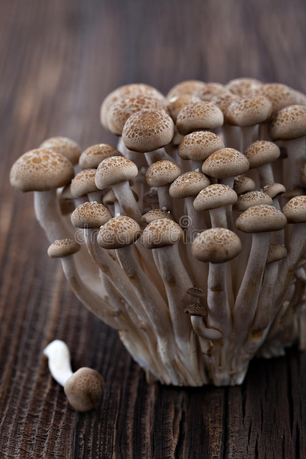 Shimeji. Mushrooms in a bowl stock images